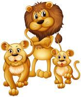 Família leão, com, um, filhote vetor