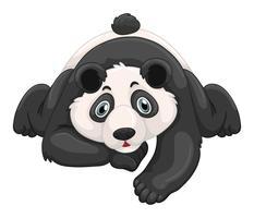 Panda bonito rastejando no chão vetor