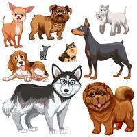 Diferentes tipos de cães vetor
