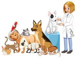 Veterinário e muitos animais feridos vetor