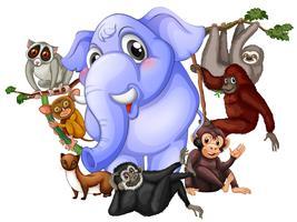 Diferentes tipos de animais vetor