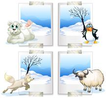 Quatro tipos de animais do ártico vetor