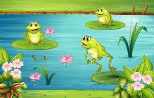 Três, rãs, vivendo, em, a, lagoa