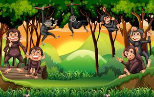 Macacos subindo árvore na selva vetor