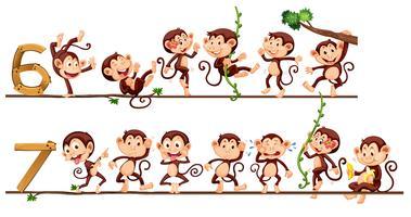 Macacos e número seis e sete vetor