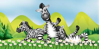 Três zebras no campo de flores
