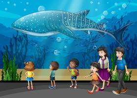 Baleia assassina no aquário vetor