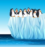Pinguins em pé no iceberg vetor