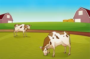 Duas vacas na fazenda vetor