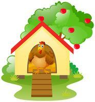 Frango no galinheiro