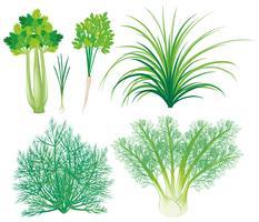 Legumes com folhas verdes vetor