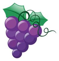 Uvas frescas no fundo branco vetor