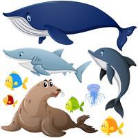 Diferentes tipos de animais marinhos vetor