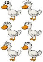 Pato com diferentes emoções faciais