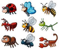 Diferentes tipos de insetos selvagens vetor