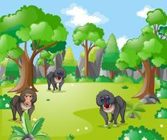 Macacos babuínos na floresta vetor