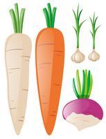 Cenouras e alho no fundo branco vetor
