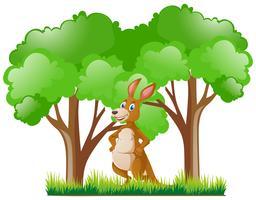 Canguru em pé na floresta
