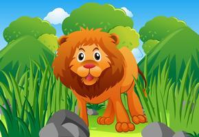 Leão selvagem no mato vetor