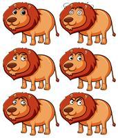 Leão com diferentes expressões