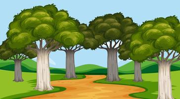 Cena do parque com árvores e trilha vetor