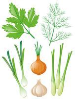 Diferentes tipos de vegetais em branco vetor