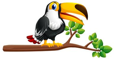 Pássaro Tucano no ramo vetor