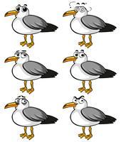 Aves de pombo com diferentes expressões faciais vetor