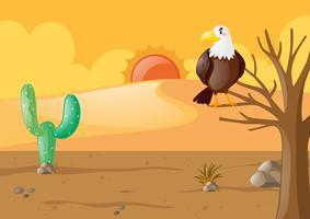 Águia no deserto seco