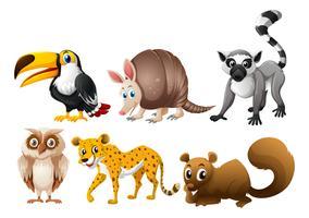 Diferentes tipos de animais selvagens vetor