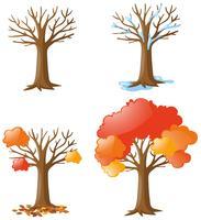 Árvore em diferentes épocas vetor