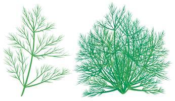 Planta verde, branco, fundo vetor
