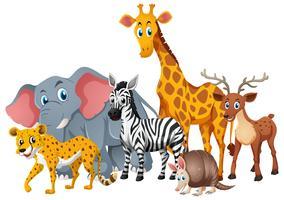 Animais selvagens juntos em grupo vetor