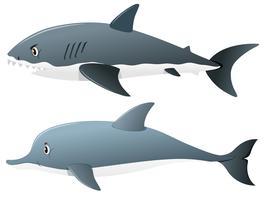 Tubarão cinzento e golfinho vetor