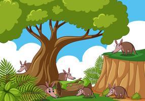 Cena da floresta com muitos tamanduás