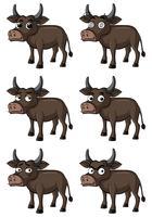 Búfalo selvagem com diferentes expressões faciais vetor