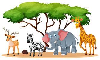 Animais no campo de savana vetor