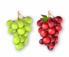 Cachos de uvas 3D realistas. Ilustração vetorial