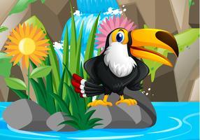 Pássaro tucano pela cachoeira vetor