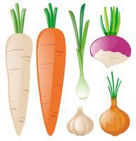 Cenouras e outras raízes vetor