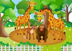 Animais selvagens que vivem no parque vetor