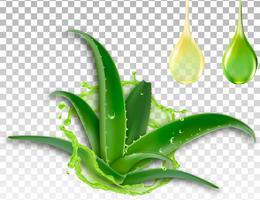 Aloe vera realista, splash e uma gota de suco, ilustração vetorial