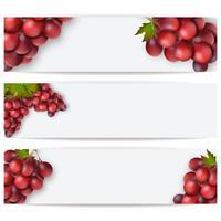 Cartões ou etiquetas com uvas realistas. Ilustração vetorial