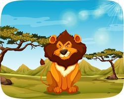 Um leão na natureza