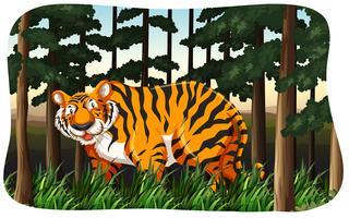 Tigre vetor
