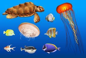 Diferentes tipos de animais marinhos no oceano vetor
