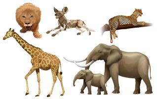Animais africanos vetor