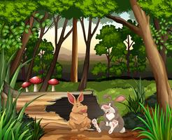 Cena, com, dois, coelhos, em, floresta vetor