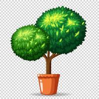 Bonsai árvore em panela de barro vetor