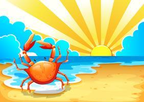 Uma praia com um caranguejo vetor